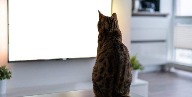 テレビを猫から守る!イタズラ対策4選