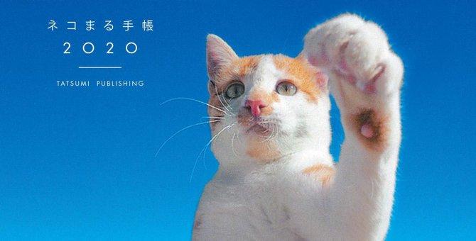 猫好きさん必見!『ネコまる手帳』