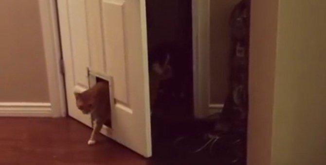 なぜ…?ドアの通り方にこだわりを持つ猫ちゃん