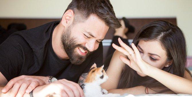 夫婦で猫を飼うメリットとデメリット!本当にねこは幸せをよんでくれる?