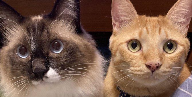 いくつ知ってる?猫を喜ばせる『ハッピーワード』5つ