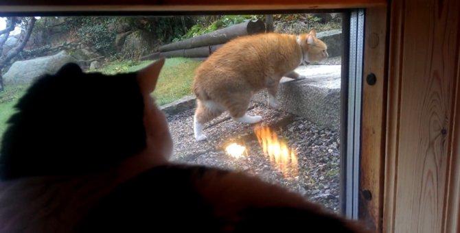 同じ猫にゃの?!ゆっくーり動く猫ちゃん