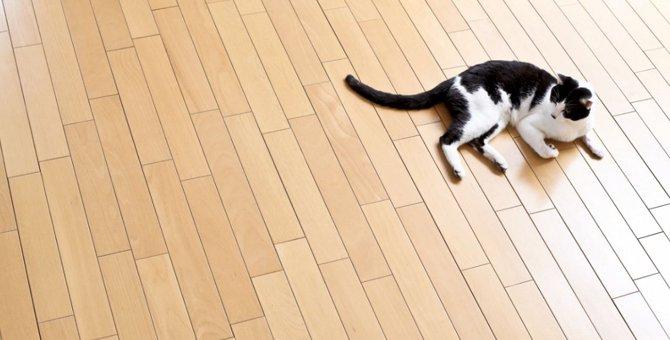 猫がフローリングをひっかく理由とその対策