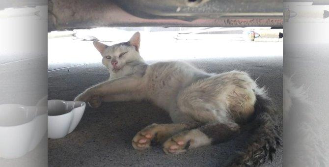 痩せ細って戻ってきた野良猫。保護するとエイズ陽性で黄疸も…