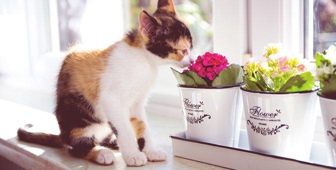 お部屋に飾って大丈夫?猫にとって安全な花と危険な花