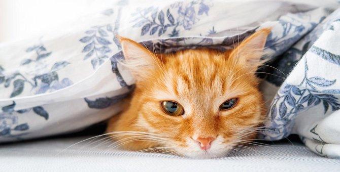 猫が飼い主の布団を横取りする5つの気持ち