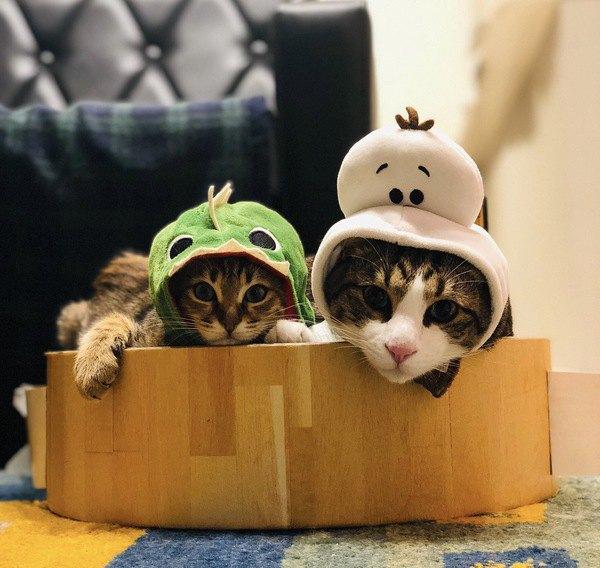 日用品で代用できる『猫のかわいいかぶりもの』7選
