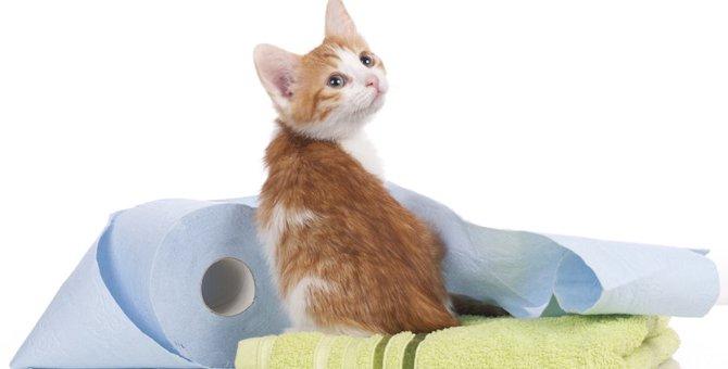 猫のおしっこ対策グッズ9選!臭いや汚れに困っている飼い主さんに