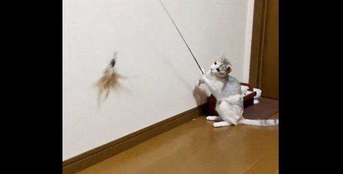 話題の『釣り竿猫』が次々と引き寄せる不思議現象とは?