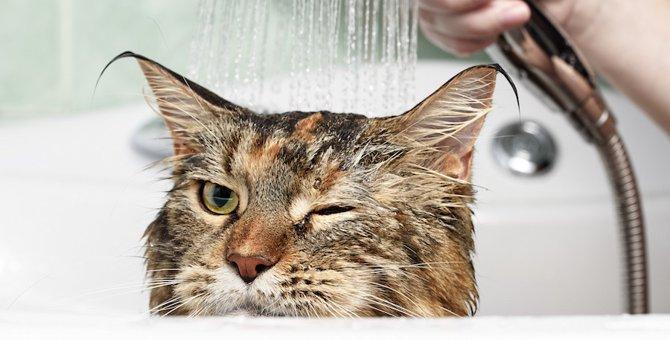どうして猫はシャワーが嫌い?4つの理由