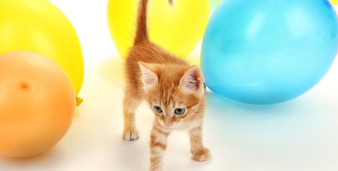 猫と風船で遊ぶとどんな反応をする?一緒に遊ぶ時のポイントや注意点も