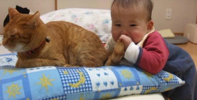 利口すぎ!尻尾を赤ちゃんにいたずらされても怒らない猫