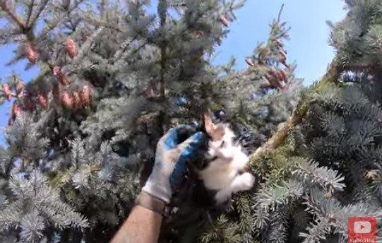 猛暑の中36時間以上も木の上にいた猫…熱中症寸前でレスキュー!