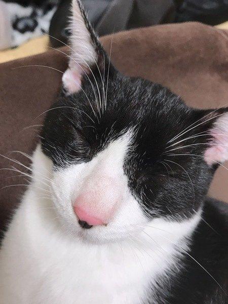 ハチワレ猫の名前が決まらない!参考にしたい猫の名前をご紹介