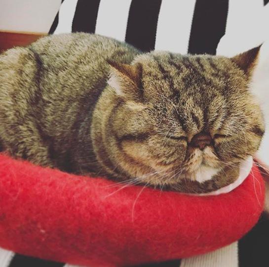 猫の寝顔がかわいい癒しの写真18選