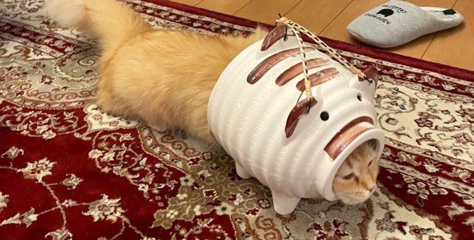 勇者感が半端ない!蚊取りブタアーマーを装着する猫さんが話題!