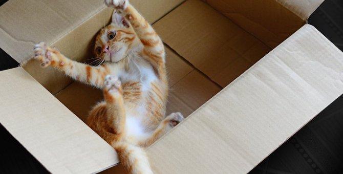 猫はどうして箱が好きなの?4つの理由