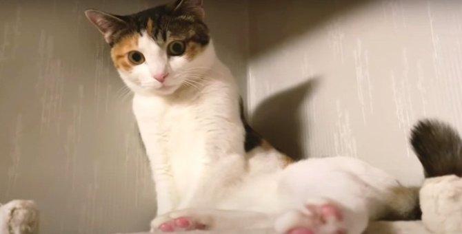 『譲ってあげるにゃ♡』ちょっと大人になった猫ちゃん