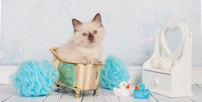 猫をお風呂に入れるコツ!入れ方の手順や解説動画を紹介