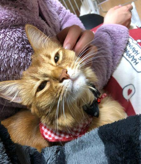 猫がヒゲを『ピーン』と伸ばすときの心理3つ