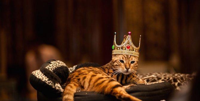世界の高価な猫ちゃんたち!一番高い猫種とは?