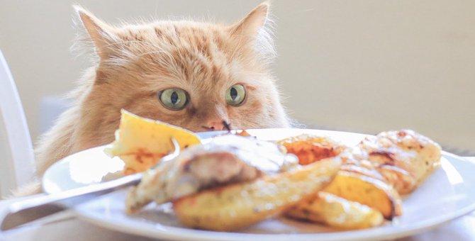 食欲の秋!猫に食べさせて良い物、悪い物を確認しよう!