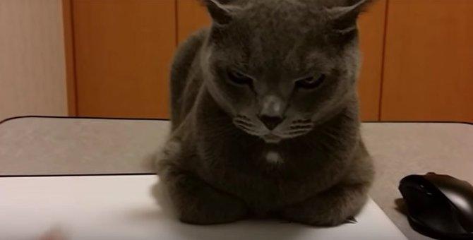 パソコンは絶対に渡さないマンな猫が可愛い