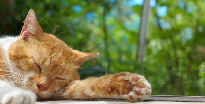 猫が『熱中症』になっている時の初期症状3選!早めに見極めて適切な対処を!