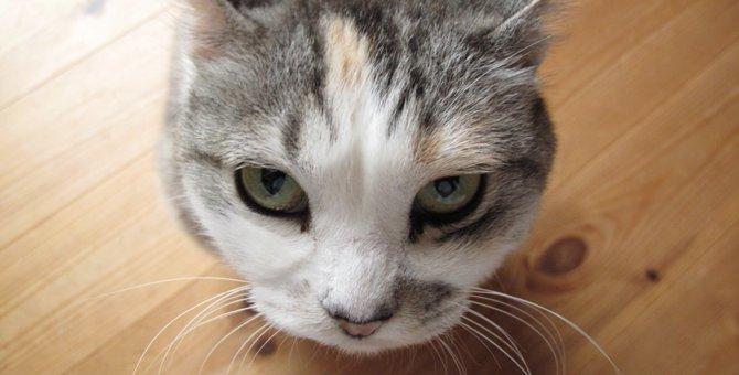 """「喧嘩は止めるニャ~!」大声で夫婦ケンカ中、足元にやってきた猫""""タビ""""がした事"""