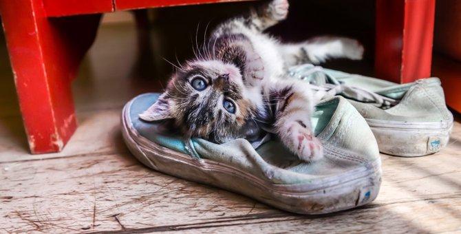猫デザインのスニーカーおすすめ7選!足元から可愛く