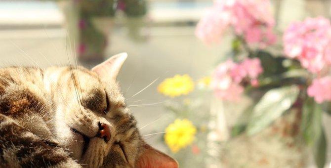 猫が寝ながら『ゴロゴロ』喉を鳴らす理由3つと注意点