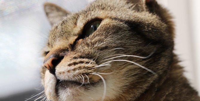 『愛情不足の猫』に共通する特徴4つ