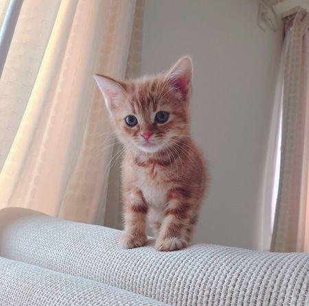 猫がオドオドしている時の心理5つ