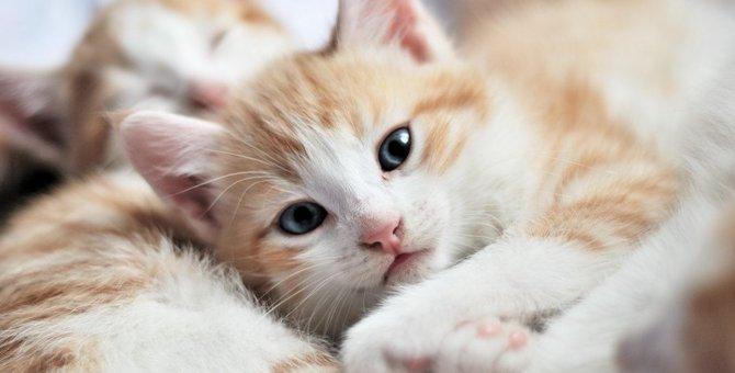 猫が不安を感じているときにするべきこと5つ