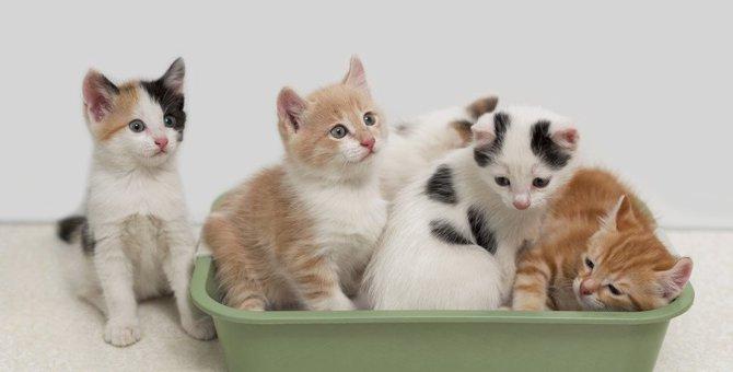 猫同士の『相性が悪いとき』にみせる行動3つ!仲良くさせるための方法とは?