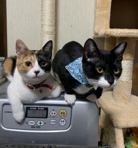 猫同士があまり仲良くない場合の飼育のコツ3つ
