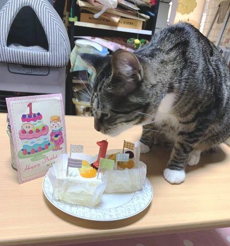 猫は猫用ケーキが好き?食べてくれない4つの理由