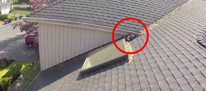 屋根の上から降りて来ない…立ち往生する猫をレスキュー