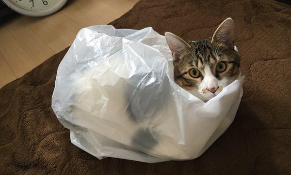 思わず笑っちゃう猫の行動5選