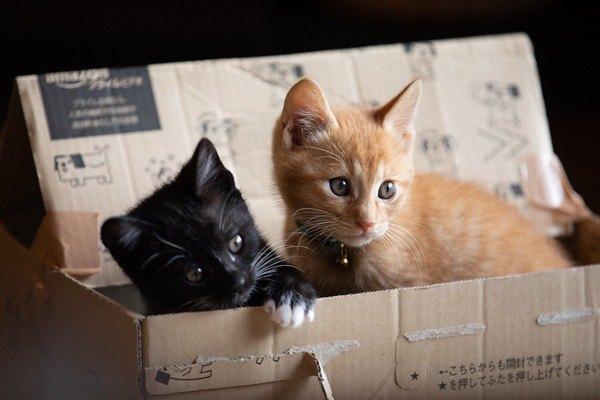 なぜ猫は『箱』に入りたがるのか?5つの理由