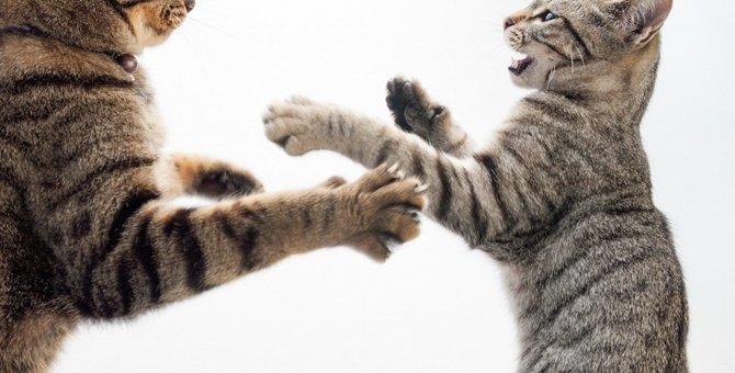 もう限界!猫パンチ5秒前の仕草