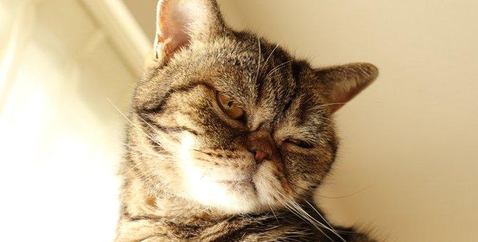 猫に愛情が足りないと感じさせるNG行為3つ