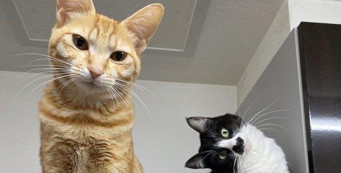 あざと可愛い過ぎるポーズを決める猫のアピールが可愛いと話題
