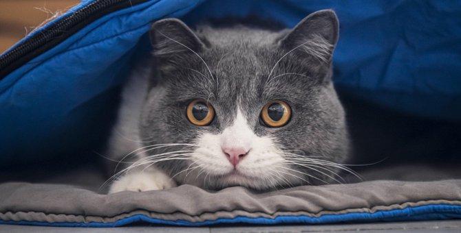 猫の瞳孔が開いている時にやってはいけないNG行為4つ