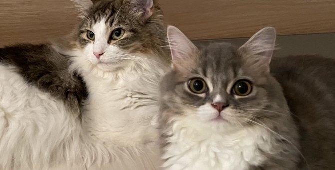 猫の『オス・メス』にはどんな違いがある?性格や特徴を解説!