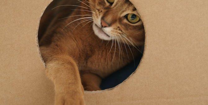 猫に遊具をプレゼントしよう!おすすめ商品から手作りの方法まで