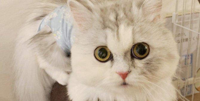 流通からはじかれた過去を持つ愛猫|Laylaのペットリーディング