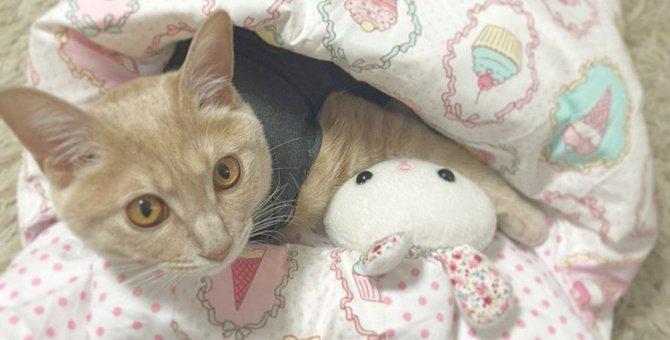 人間が寝ているときに『猫がしがちな行動』5選
