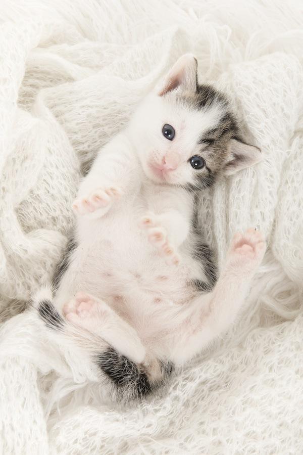 猫が「ごろんごろん」するのはどんな時?