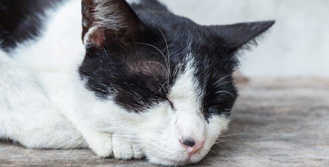 猫の目の上がはげる原因と特徴